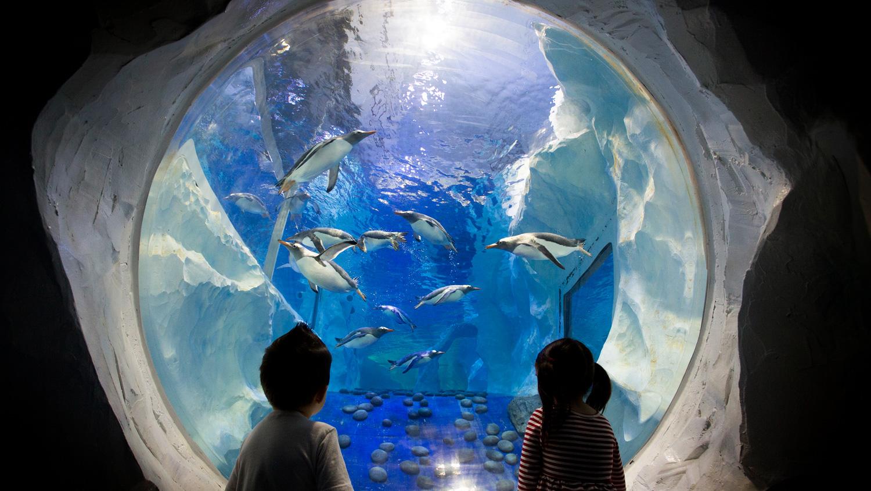 Penguin Ice of Adventure