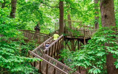 HBL Associates completes work on new Cheshire woodland adventure park